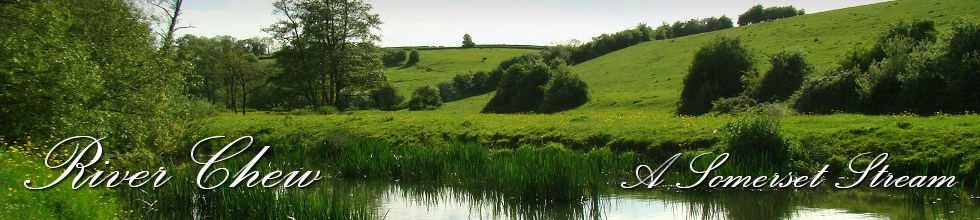 River Chew - A Somerset Stream